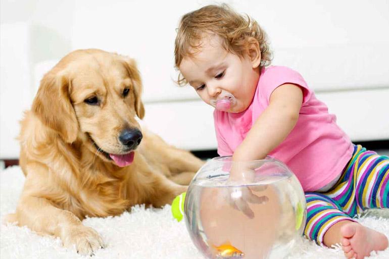 домашни любимци за деца